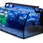 Easy Steps to Clean Your Aquarium