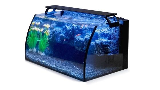 Easy Steps to Clean Your Aquarium